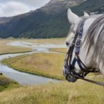 horse overlooking mountain river view riding holiday new zealand by globetrotting