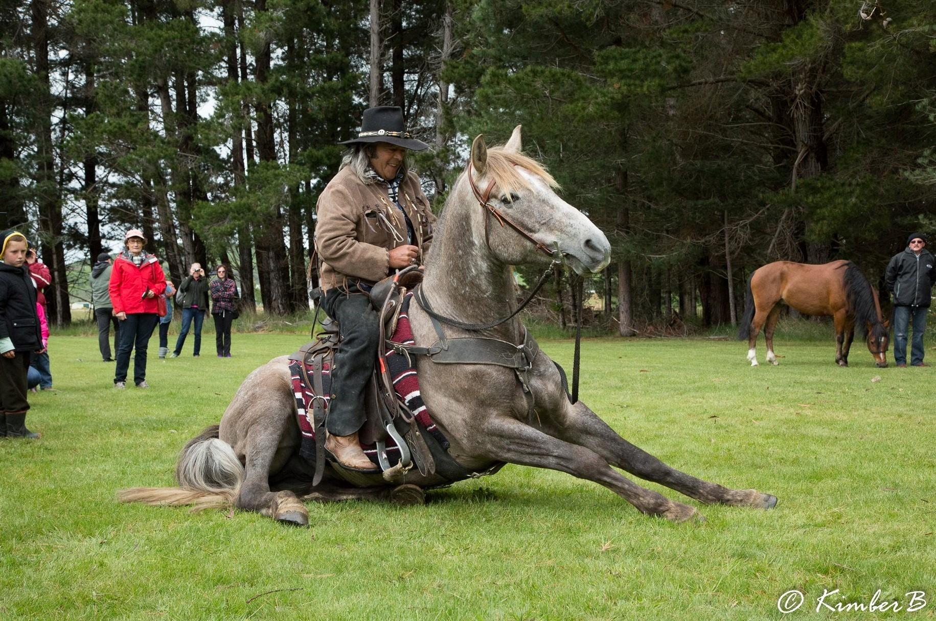 Globetrotting Guest Horse: Te One - Globetrotting horse riding holidays