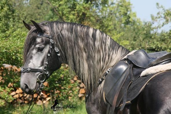 Horse Breed: Warlander - Irene Hohe / Warlander-Franken - Globetrotting horse riding holidays