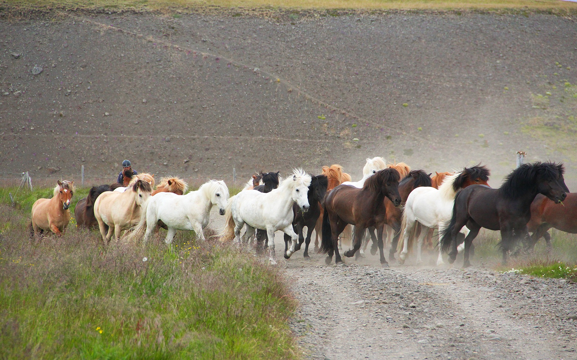 Touch of the Highlands Ride, Iceland - Globetrotting horse riding holidays
