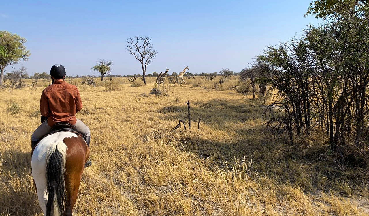 Saddle Up: Erin Harriott's Okavango Delta Ride - Globetrotting horse riding holidays