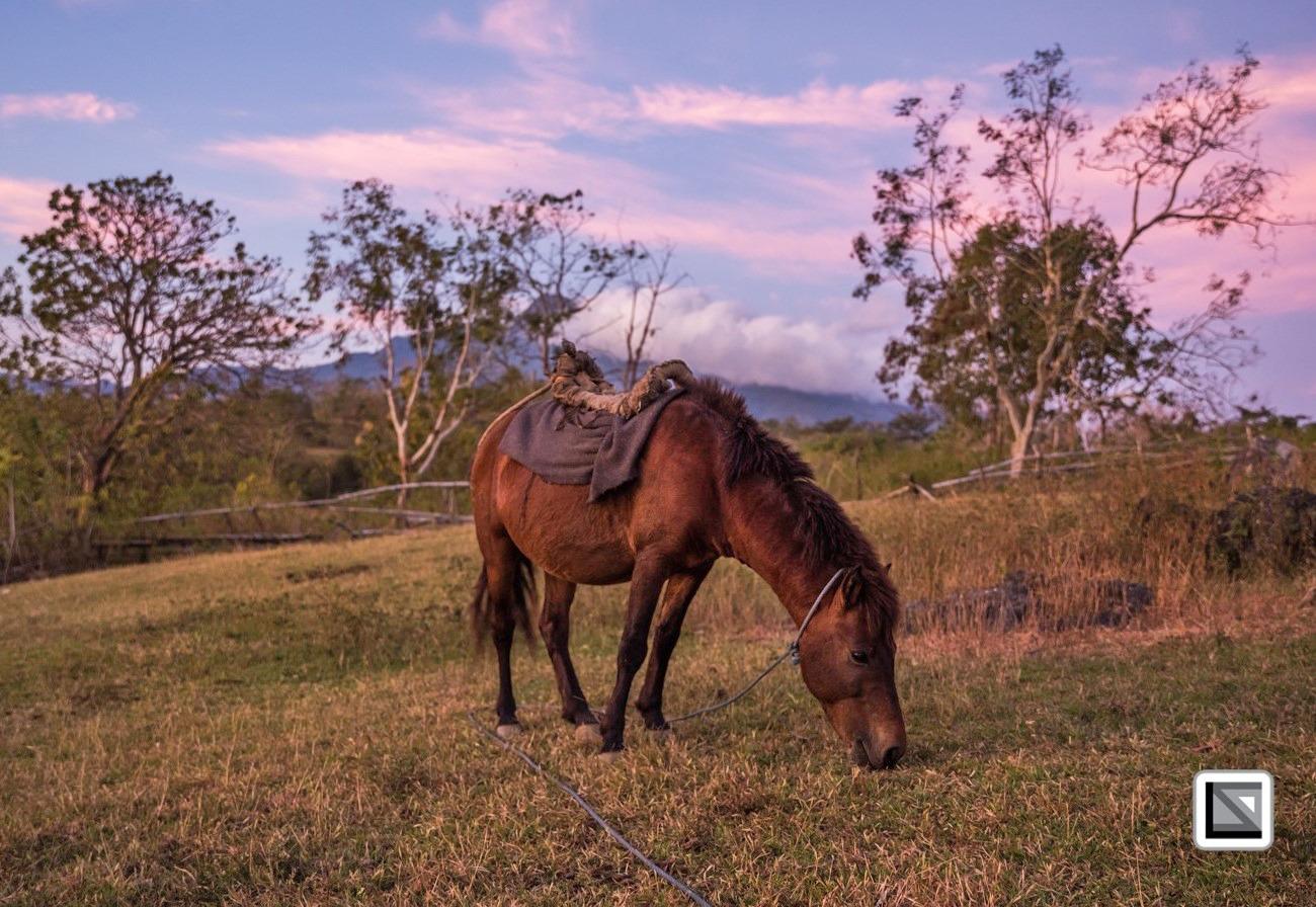 Horse Breed: Timor Pony - Claudio Sieber Photography - Globetrotting horse riding holidays