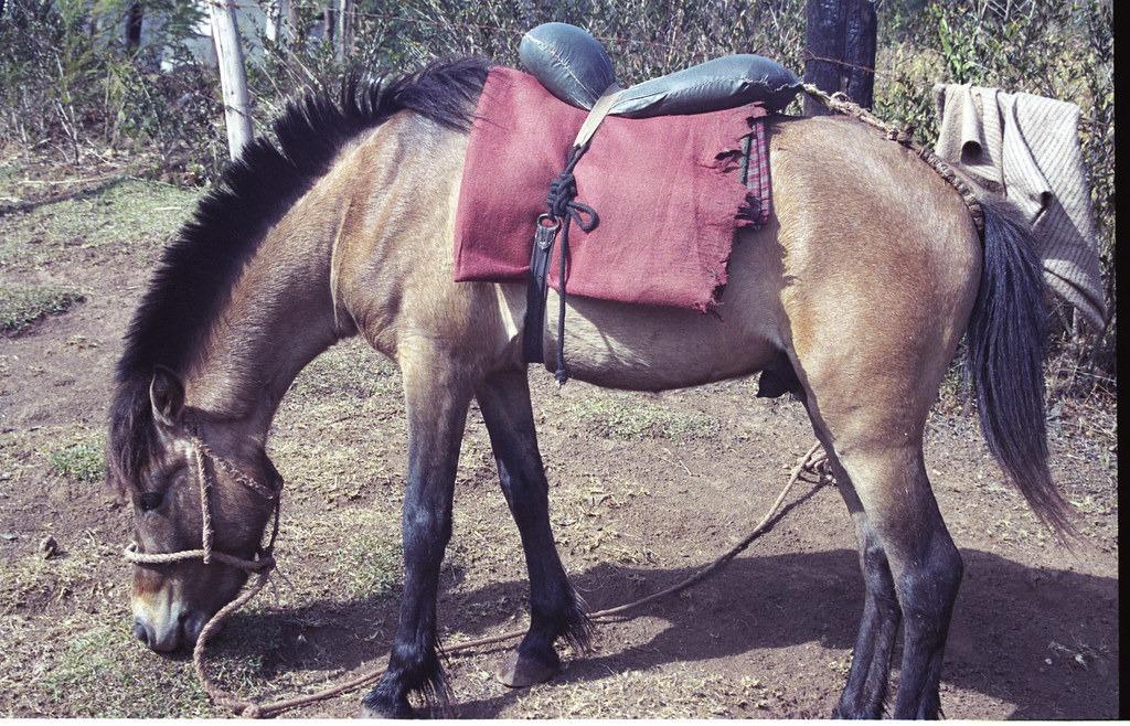 Horse Breed: Timor Pony - Charts / Flickr - Globetrotting horse riding holidays