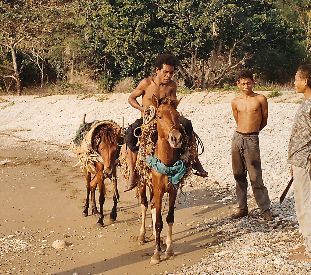 Horse Breed: Timor Pony - photo Russ Swan - Globetrotting horse riding holidays