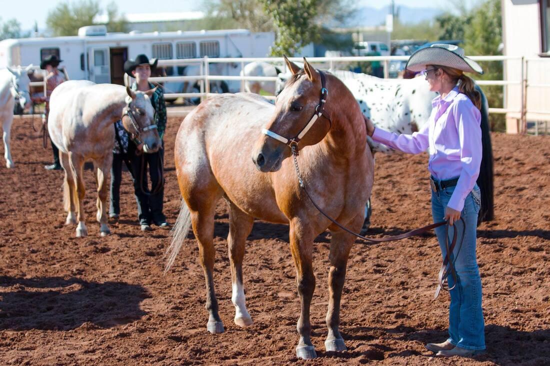 Horse Breed: Pony of the Americas - Arizona Pony of the Americas Club - Globetrotting horse riding holidays