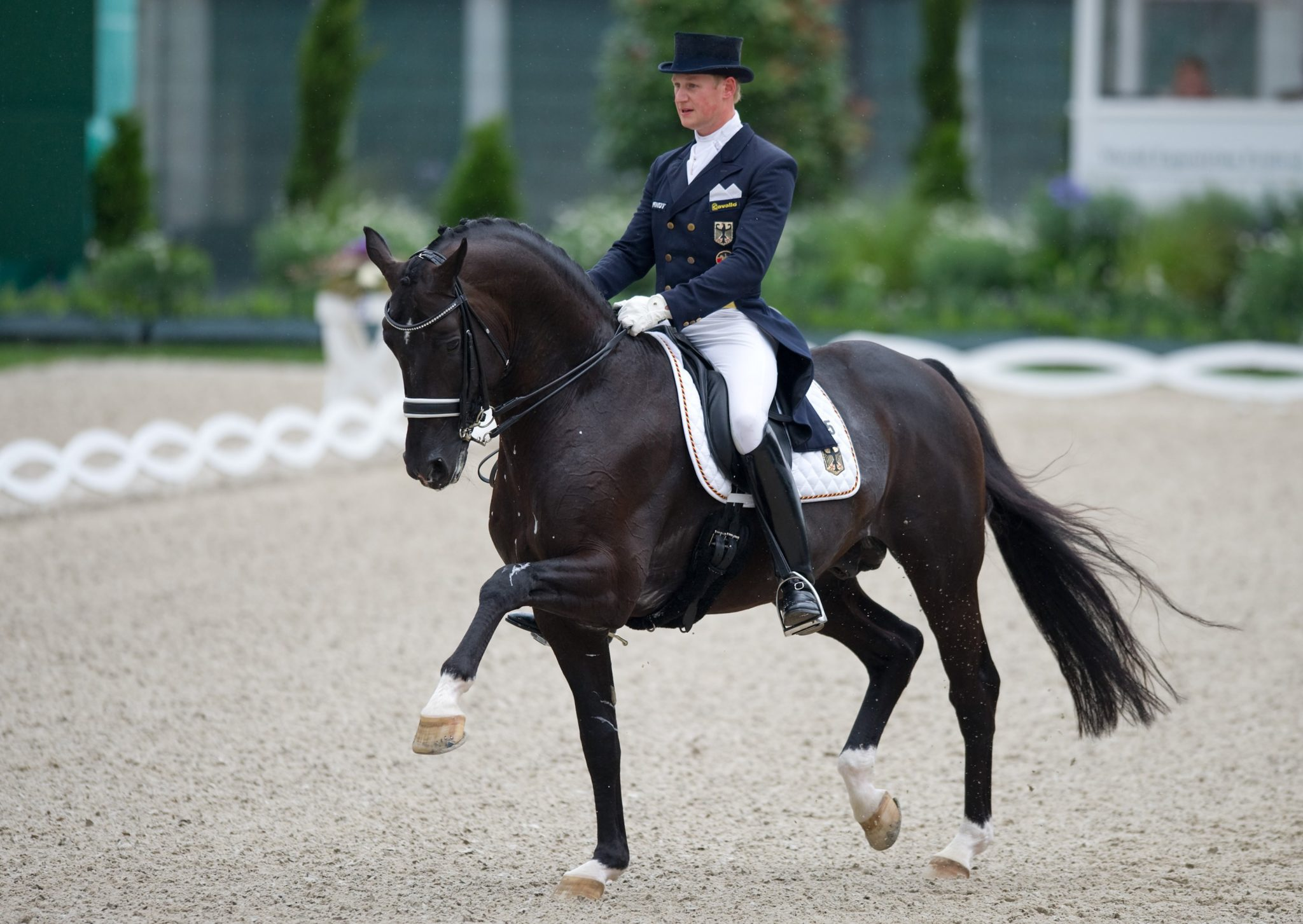 Horse Breed: Dutch Warmblood - Elite Stallions - Globetrotting horse riding holidays