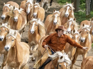 The Haflinger Horse Run - AP Photo / Jens Meyer - Globetrotting horse riding holidays
