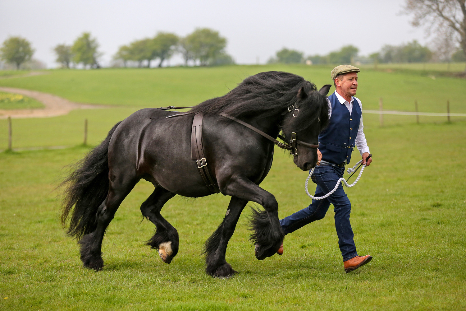 Horse Breed: Dales - image via Your Horse Magazine - Globetrotting horse riding holidays