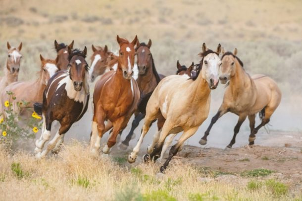 Horse Breed: Criollo - Globetrotting horse riding holidays