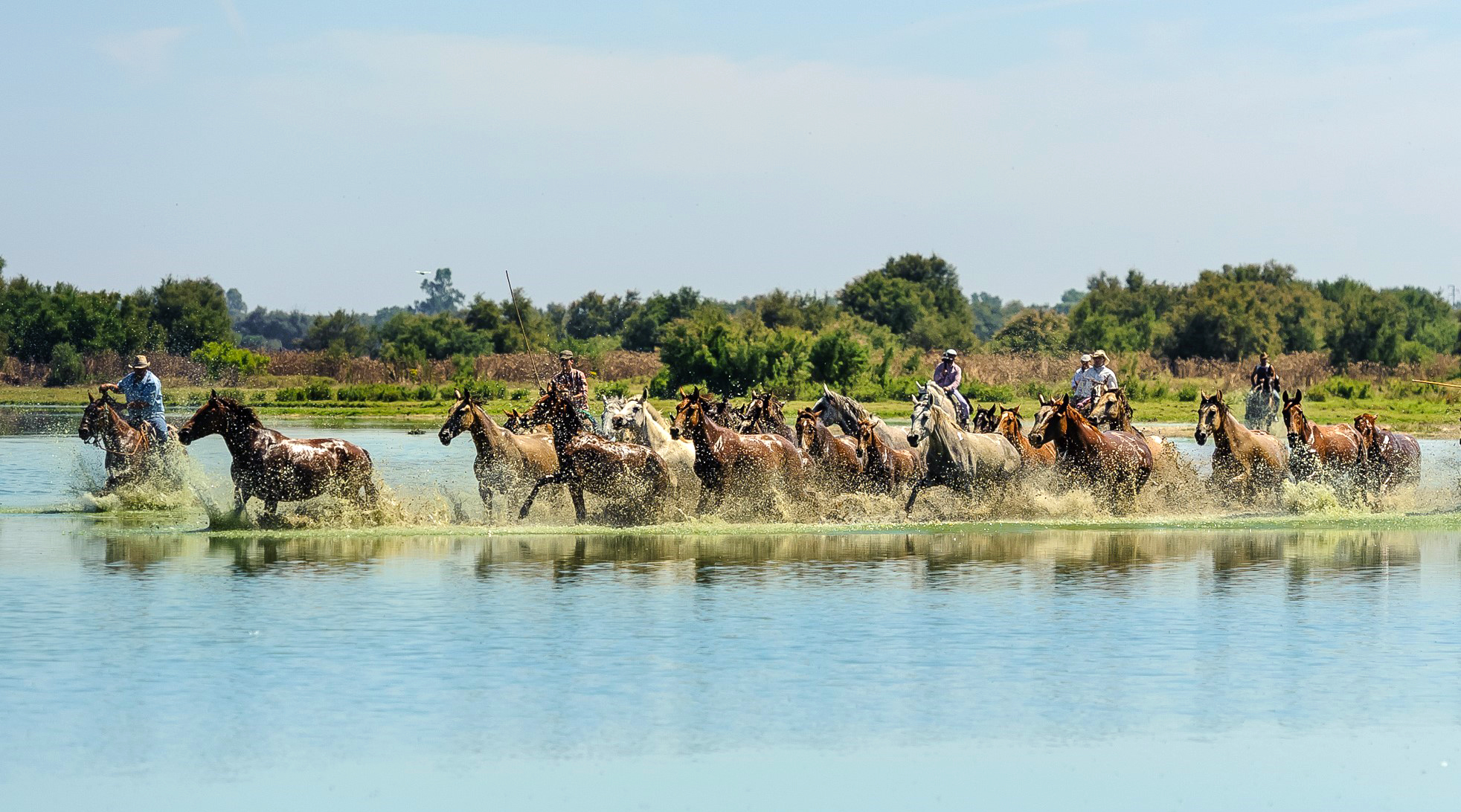 Horse Breed: Marismeño - photo by Eddy Coppens - Globetrotting horse riding holidays