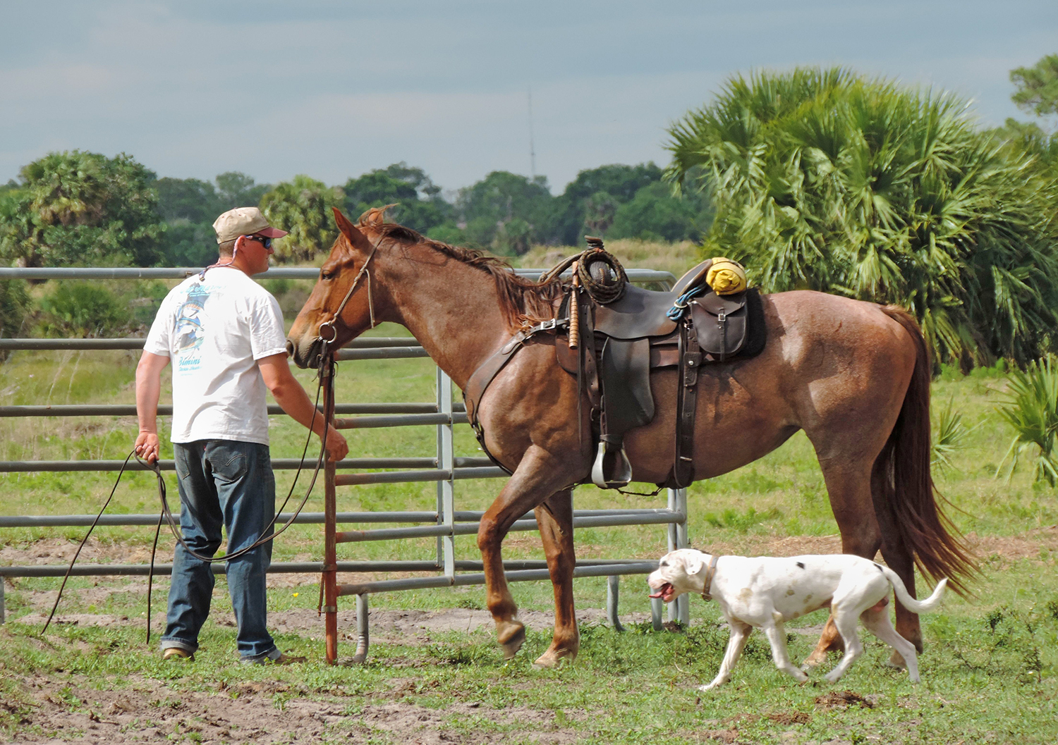 Horse Breed: Florida Cracker - Globetrotting horse riding holidays
