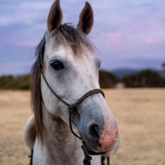 horse riding holiday Tasmania by Globetrotting
