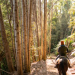 horse riding forest on tasmania horse riding holiday by globetrotting