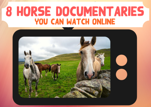 Eight Horse Films You Can Watch Online - Globetrotting horse riding holidays