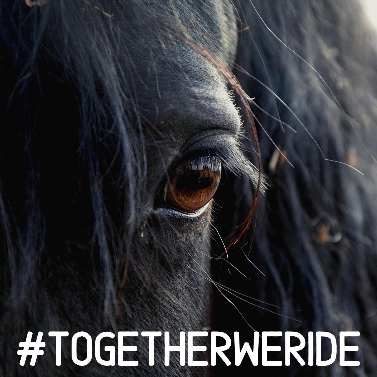 #togetherweride - Globetrotting horse riding holidays