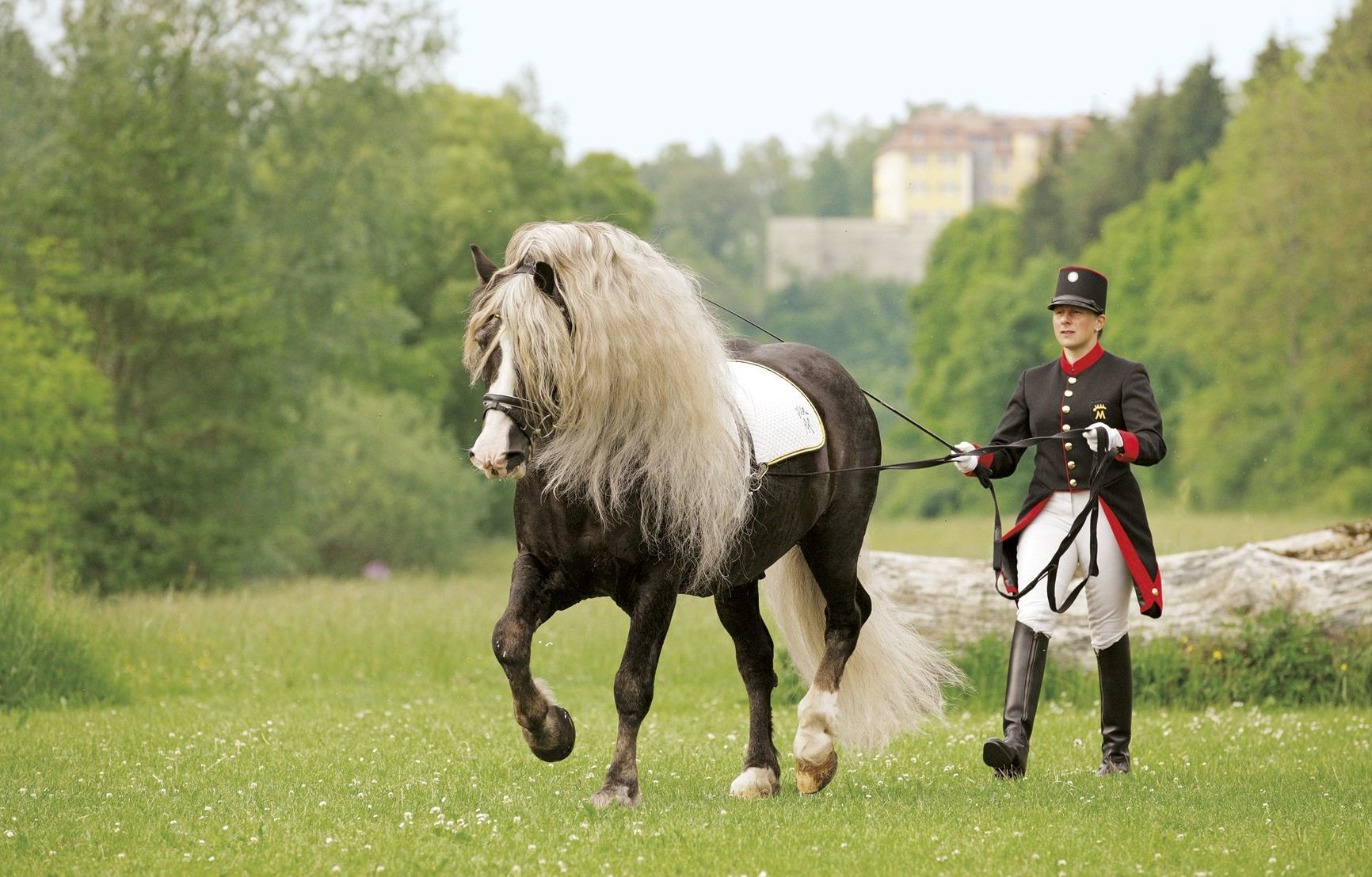 Horse Breed: Black Forest Horse - image via Horseweb - Globetrotting horse riding holidays