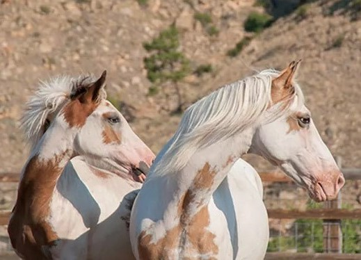 Horse Breed: Spanish Mustang - Globetrotting horse riding holidays