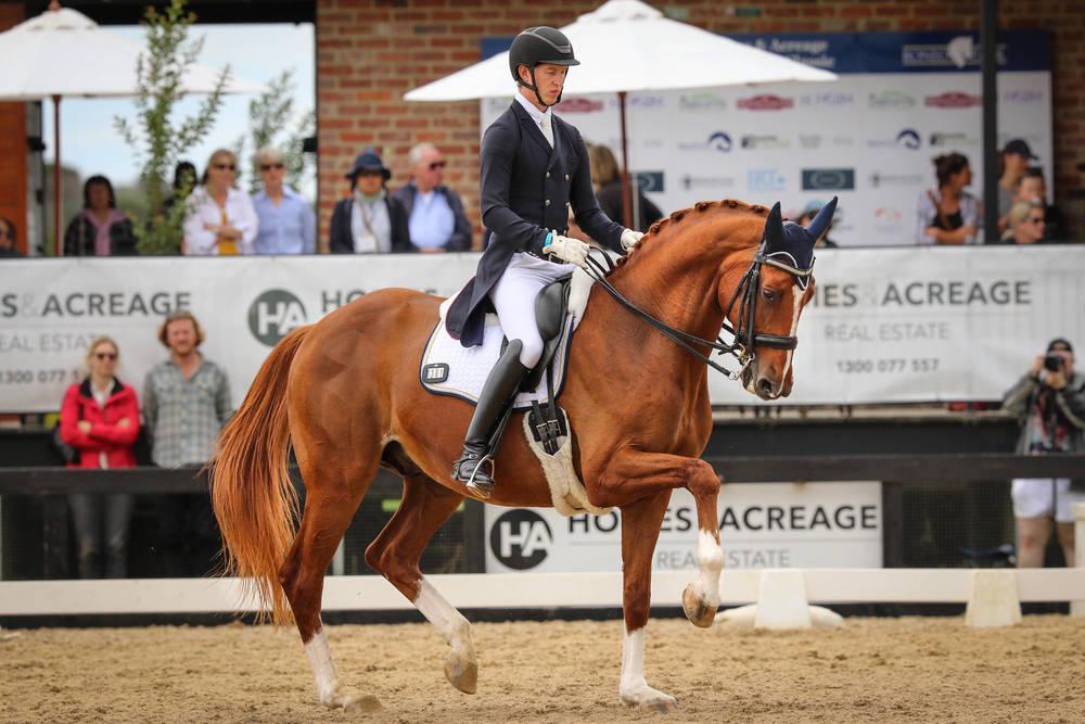 Horse Breed: Danish Warmblood - image via Mulawa Performance - Globetrotting horse riding holidays