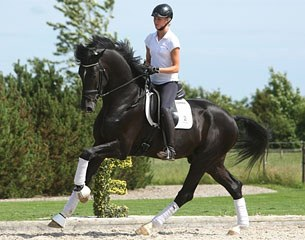 Horse Breed: Danish Warmblood - Globetrotting horse riding holidays