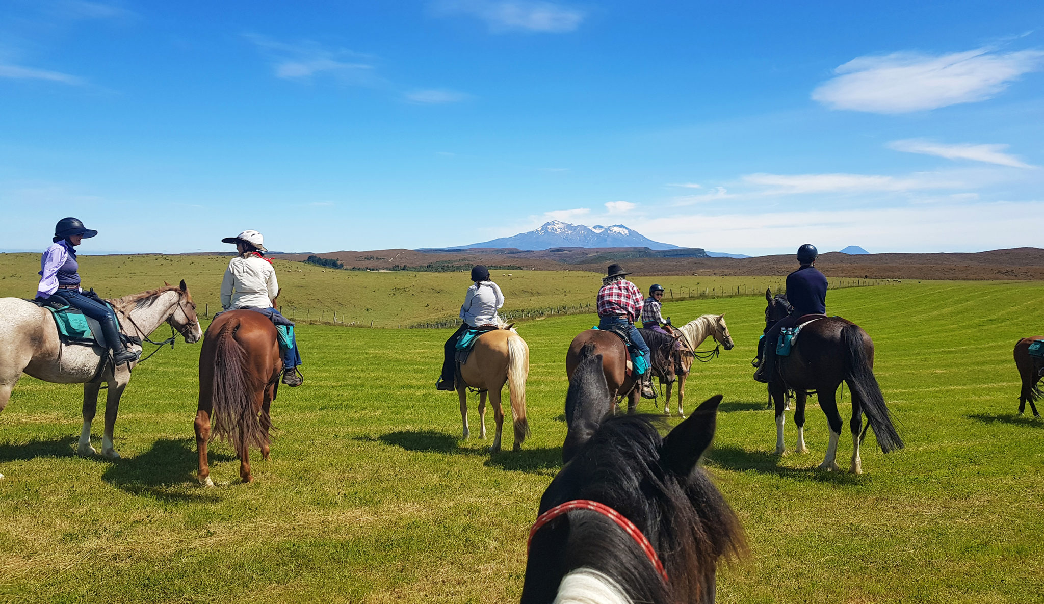 Feedback on the River Valley Ride, North Island, New Zealand - Globetrotting horse riding holidays