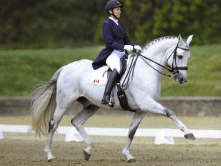 Horse Breed: Oldenburg - image via Phelps/Oldenburg Horse Breeders' Society - Globetrotting horse riding holidays