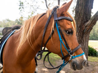 Globetrotting Guest Horse: Freddie Bear - The Shoalhaven Ride, New South Wales, Australia - Globetrotting horse riding holidays
