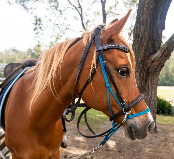 Globetrotting Guest Horse: Freddie Bear - The Shoalhaven Ride, New South Wales, Australia - Globetrotting horse riding holidays