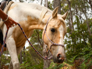 Globetrotting Guest Horse: Opal - Tassie Tiger Trail, Australia - Globetrotting horse riding holidays