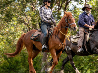 Guest Horse: Nick - Yarra Valley Ride, Victoria, Australia - Globetrotting horse riding holidays