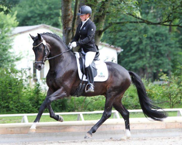 Horse Breed: Mecklenburger - Globetrotting horse riding holidays