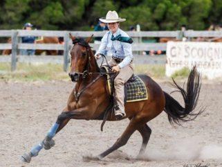 Horse Breed: Australian Stock Horse - image via ASAR Stock Horse Stud - Globetrotting horse riding holidays