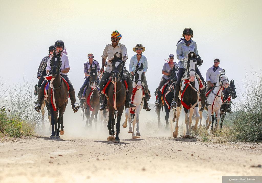 Horse Breed: Marwari - Globetrotting horse riding holidays