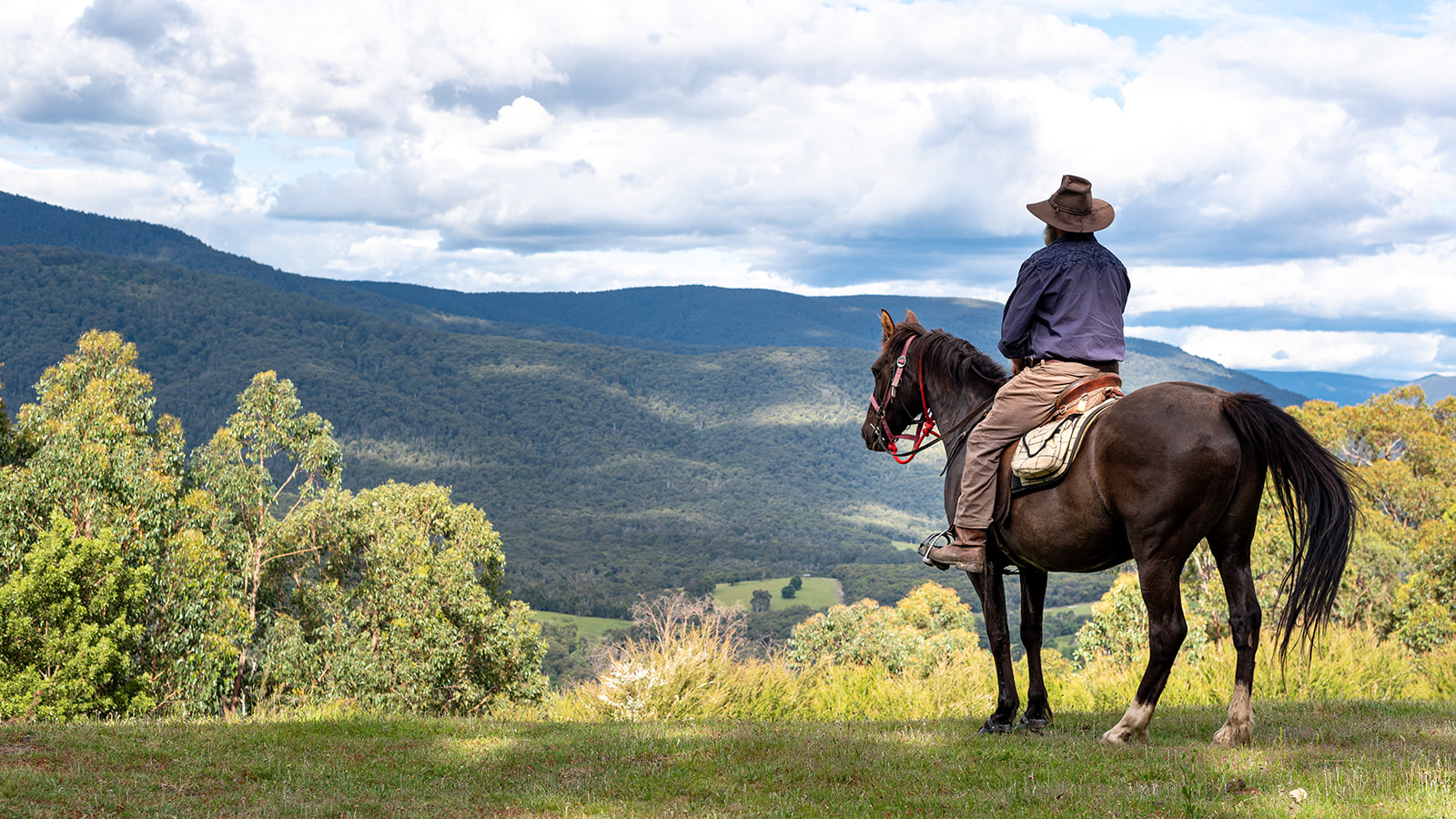 Globetrotting Guide Horse: Fudge - Yarra Valley Ride, Victoria, Australia - Globetrotting horse riding holidays
