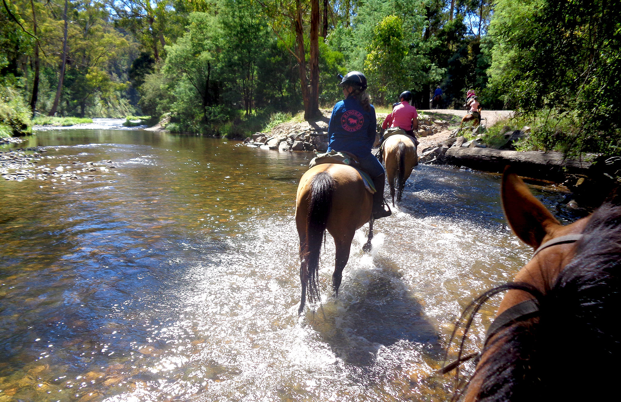 Howqua River Ride, Victoria, Australia - Globetrotting horse riding holidays