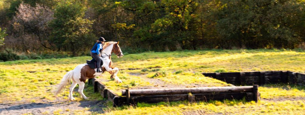Castle & Estate Ride, Ireland - Globetrotting horse riding holidays