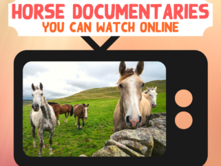 Horse Documentaries You Can Watch Online - Globetrotting horse riding holidays