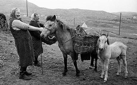 Horse Breed: Eriskay Pony - image via The Eriskay Pony Society - Globetrotting horse riding holidays