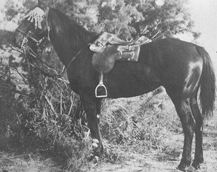 Bill the Bastard - image via The War Horse Memorial - Globetrotting horse riding holidays