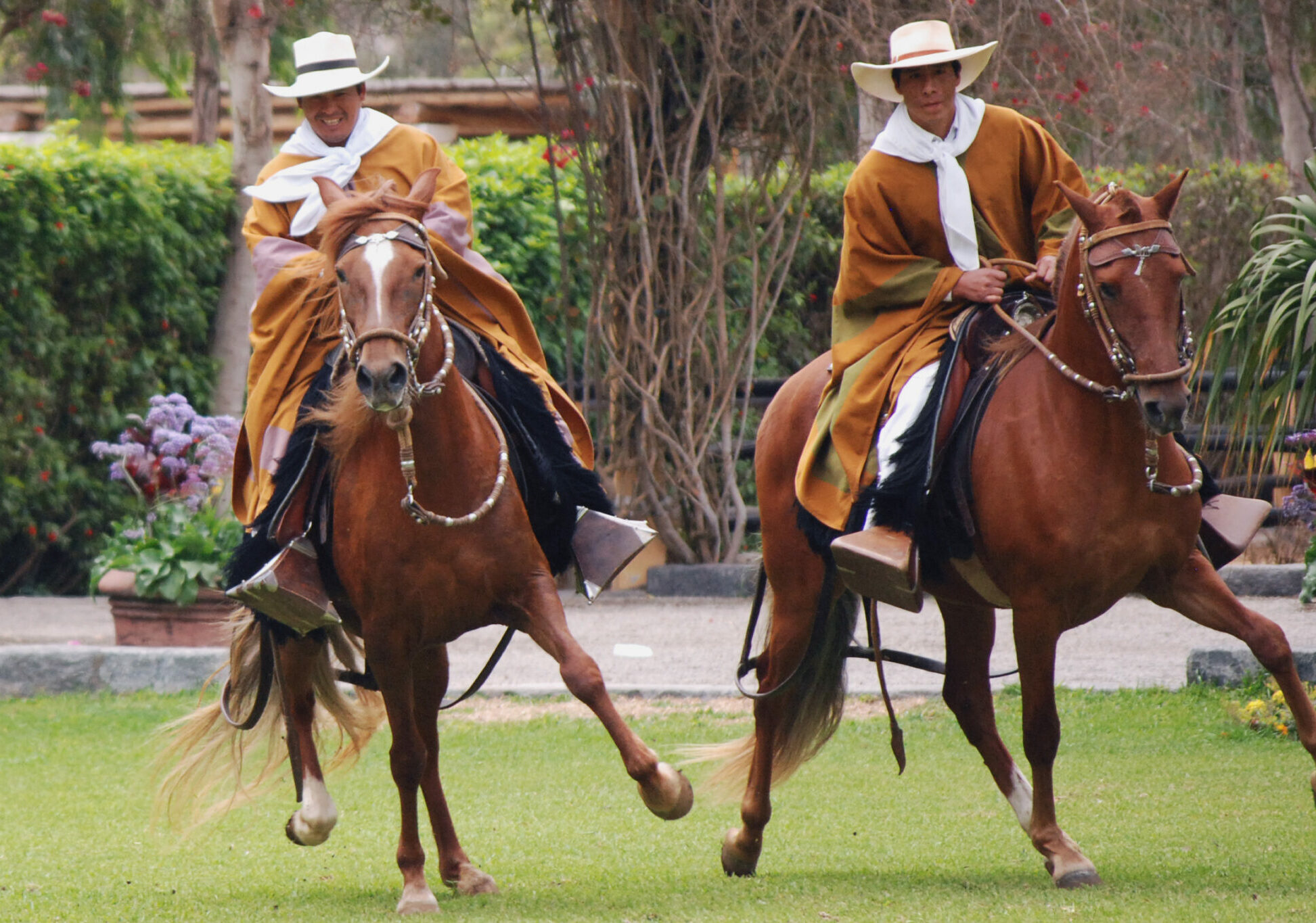 Horse Breed: Peruvian Paso - photo by Harvey Barrison on Wikimedia Commons - Globetrotting horse riding holidays