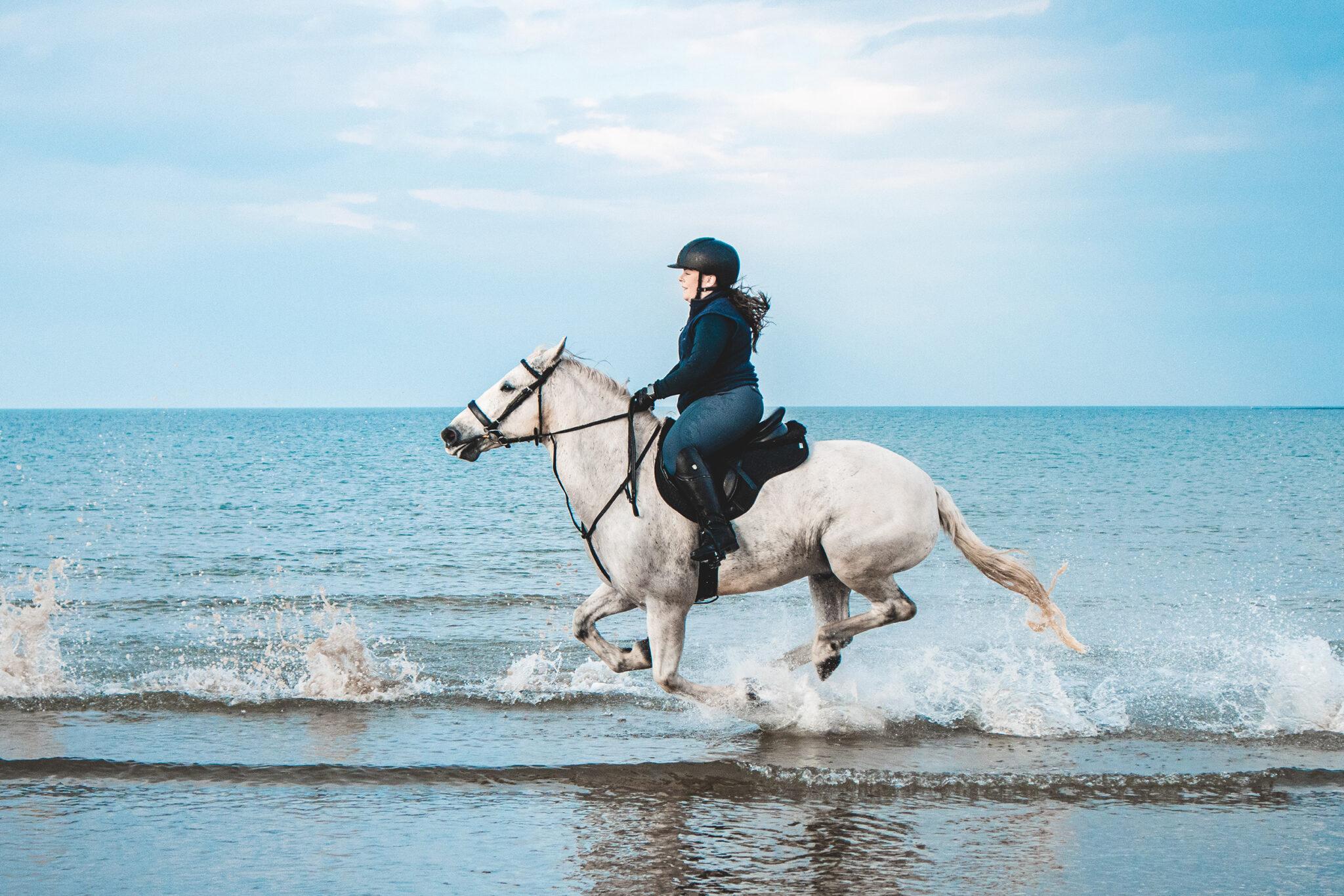 Horse Breed: Connemara - photo by Kyle Mackie - Globetrotting horse riding holidays