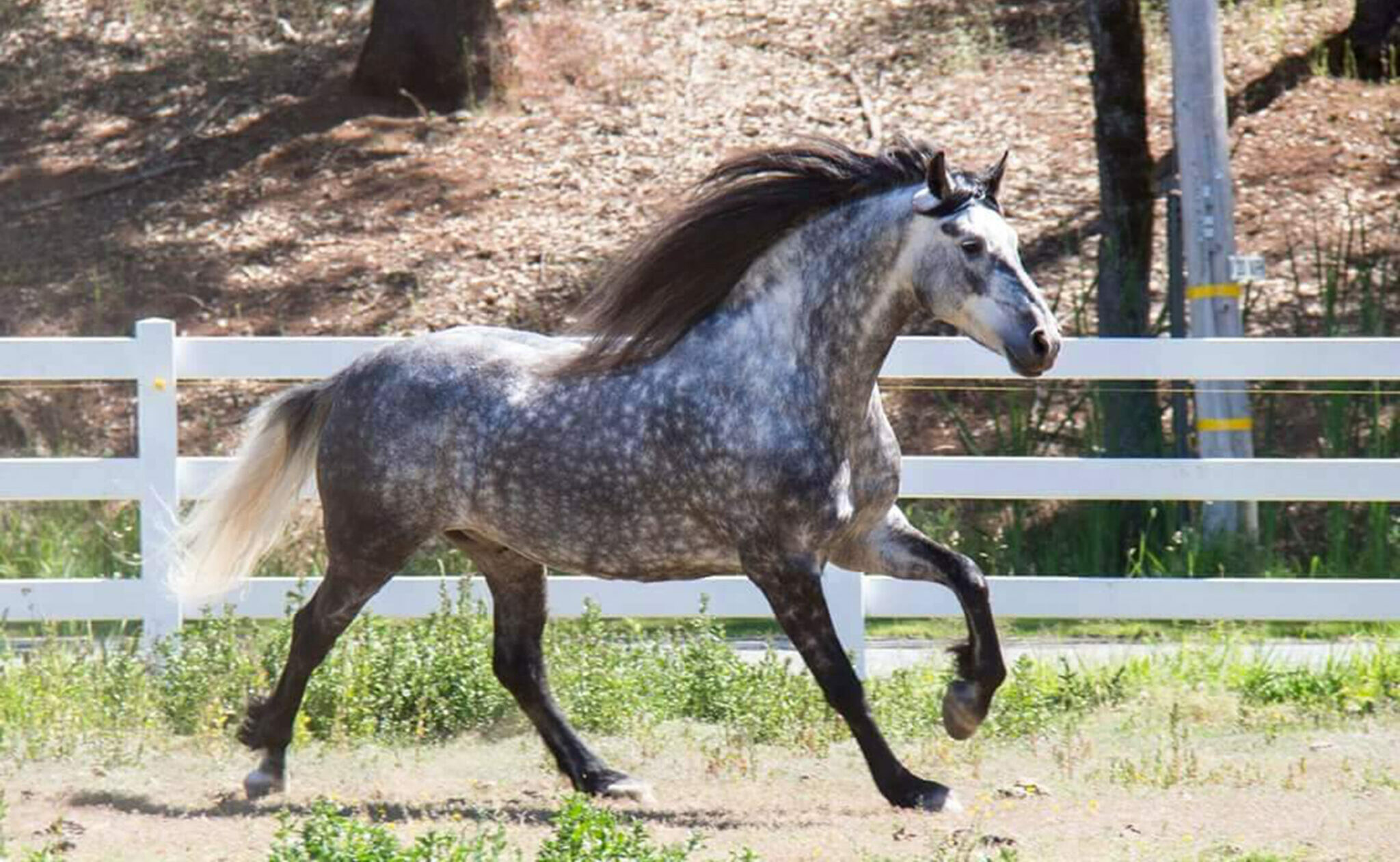 Horse Breed: Warlander - photo by Randy Stewart on Wikimedia Commons - Globetrotting horse riding holidays