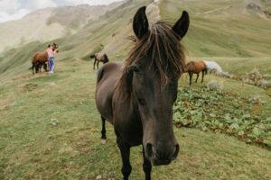 Horse Breed: Megruli - photo by Zhanna Fort - Globetrotting horse riding holidays