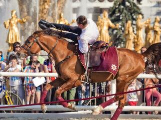 Horse Breed: Don - photo by Julia Shepeleva/Shutterstock.com - Globetrotting horse riding holidays