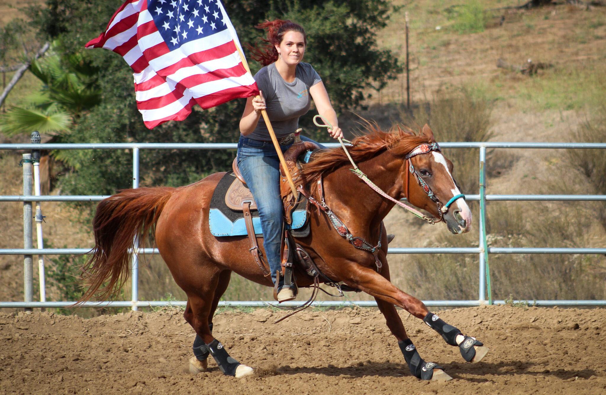 Horse Breed: Quarter Horse - photo by Christine Benton on Unsplash - Globetrotting horse riding holidays