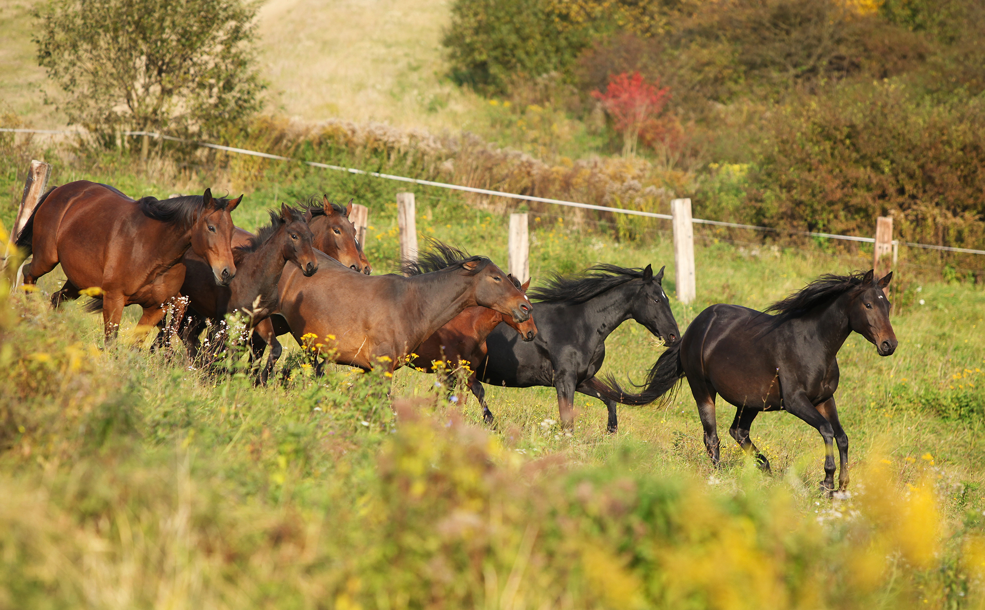 Horse Breed: Kabarda - photo by Zuzule/Shutterstock.com - Globetrotting horse riding holidays