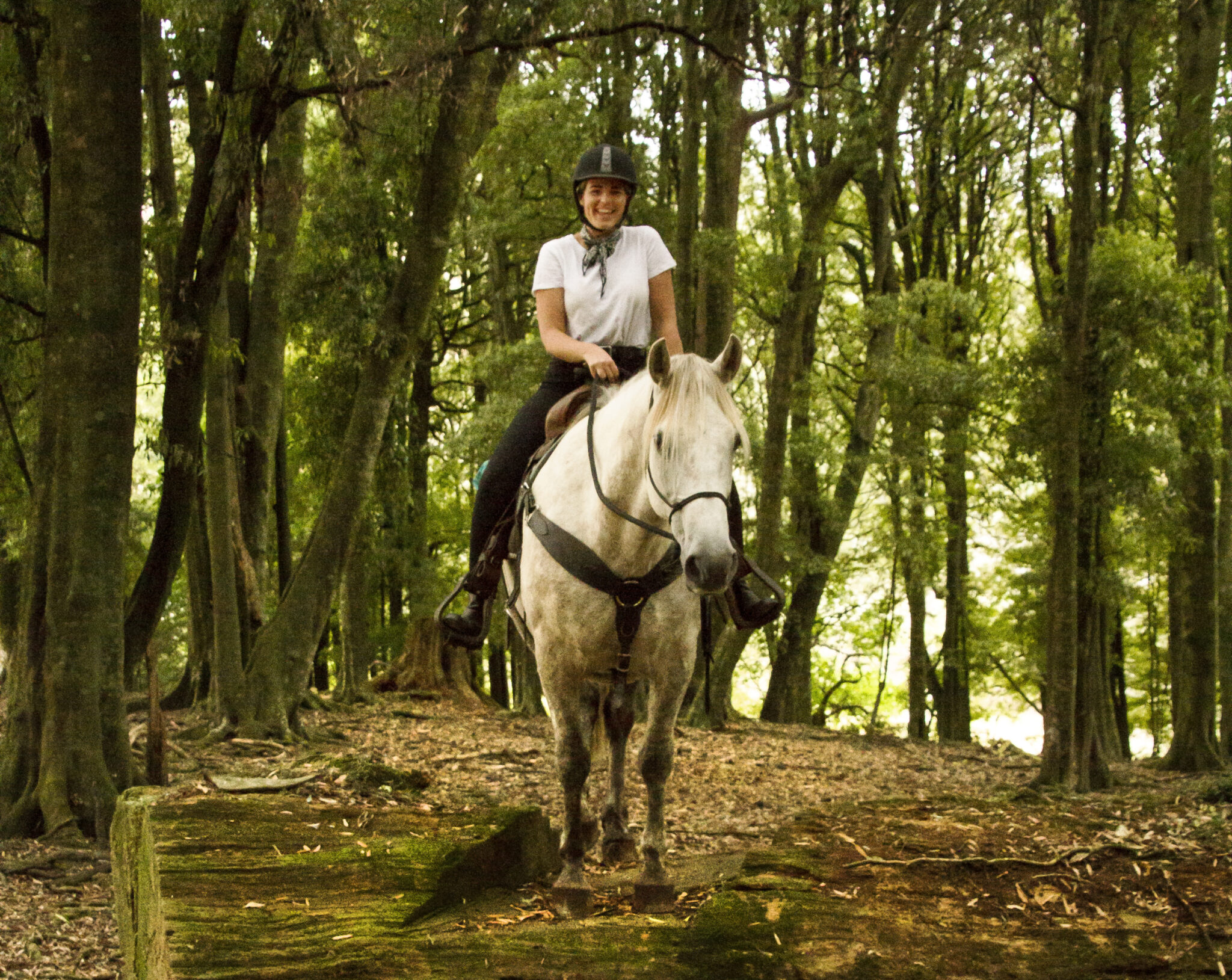 Globetrotting Guest Horse: Te One - The River Valley Ride, North Island, New Zealand - Globetrotting horse riding holidays