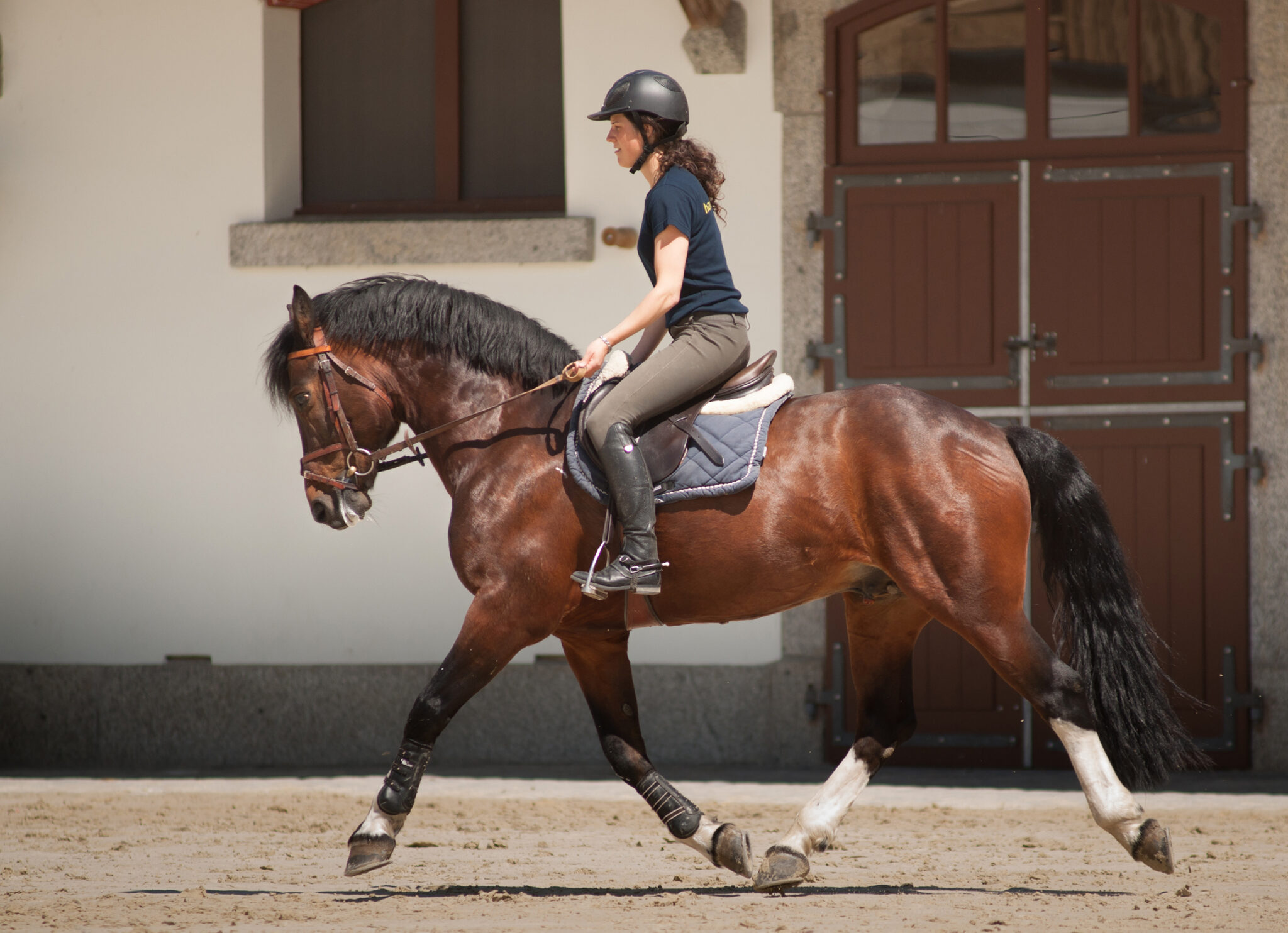 Horse Breed: Freiberger - photo by Ludovic Péron on Wikimedia Commons (CC BY-SA 3.0) - Globetrotting horse riding holidays