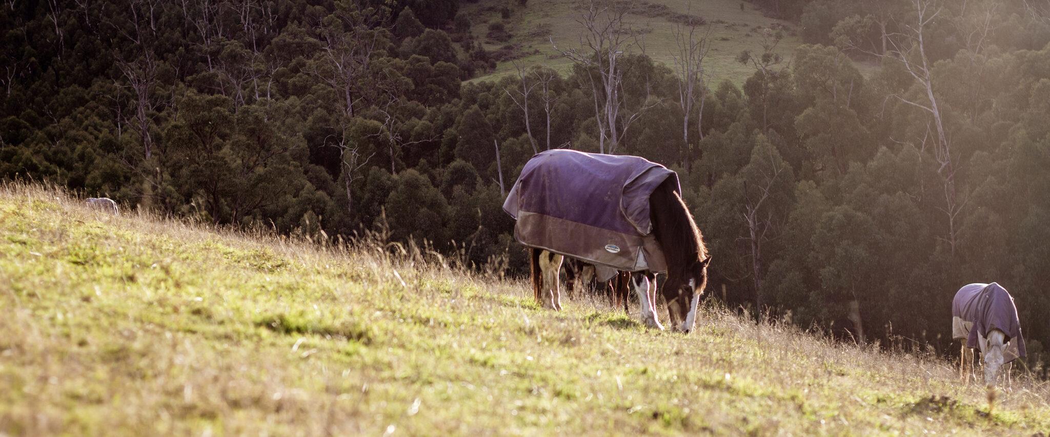 The Yarra Valley Ride, Victoria, Australia - Globetrotting horse riding holidays