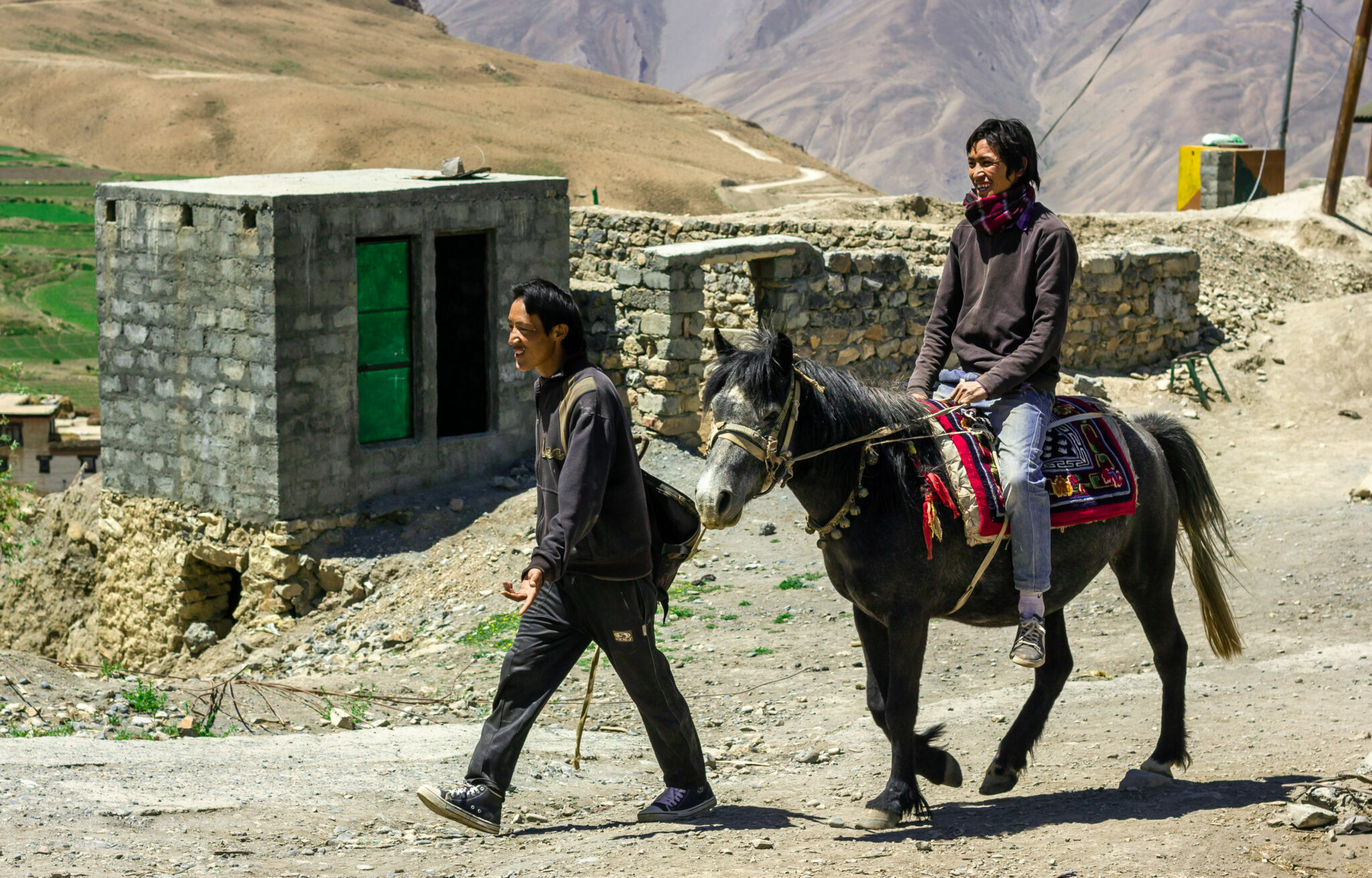 Horse Breed: Spiti - image by balajisrinivasan/Shutterstock.com - Globetrotting horse riding holidays