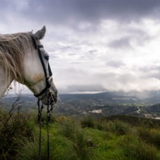 horse riding holiday in Andalusia, Spain